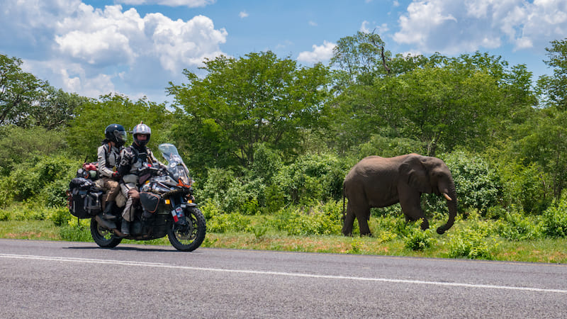 KTM 1190 riding past elephant